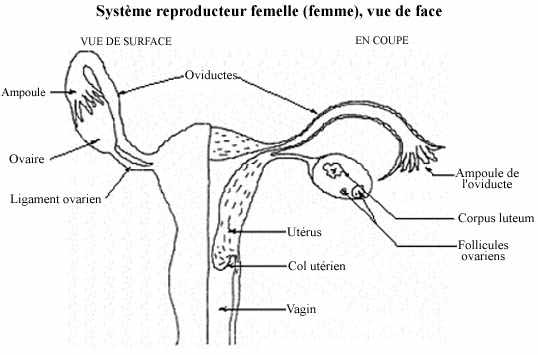 anatomie de lhomme videos pornos